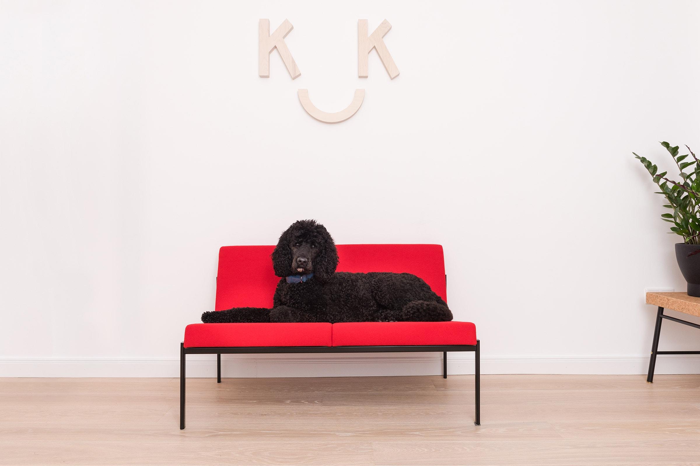 Pudel Ando auf artek kiki couch