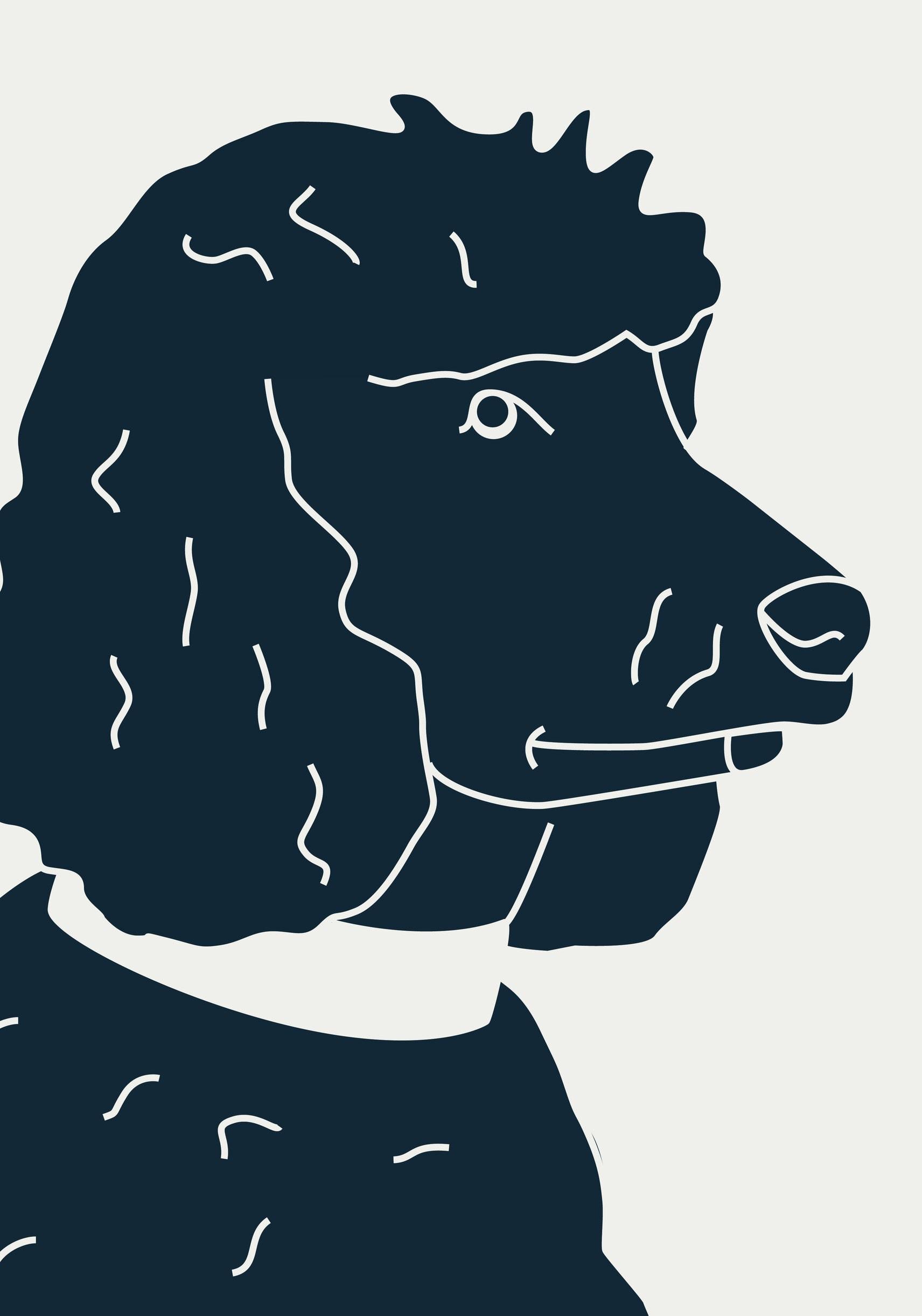 Pudel, Bürohund, office dog, KittoKatsu, Herr Ando, halloherrando